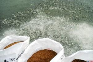 Công bố chứng nhận hợp quy thức ăn thủy sản