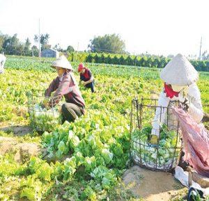 Luật Trồng trọt sẽ kiểm soát chặt phân bón và thuốc bảo vệ thực vật