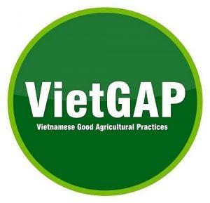Trao chứng nhận xoài Cát Chu VietGAP